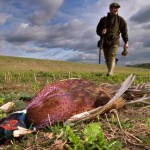 A pheasant shot in a field (Oh conservatives, how you make me laugh (and cry))