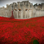 tower-poppies (At the 11th hour of the 11th day of the 11th month)
