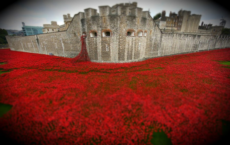 tower-poppies
